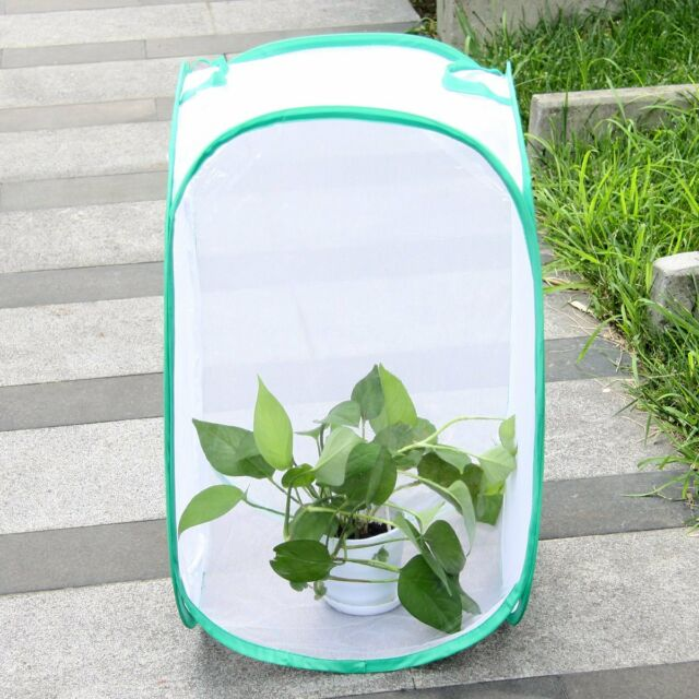 Haoun 2 Pack Mini Butterfly Habitat Cage,Insect Mesh Cage,Bug Terrarium Pop Up 5.51 x 7.08 Tall