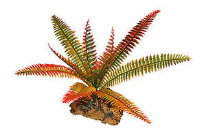 Plastic Vivarium Plant,Small Fern Mounted On Cork bark, Choice Of Two Colours