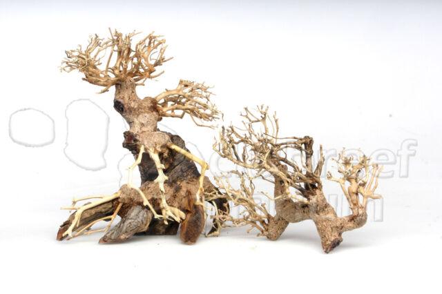 Bonsai Tree Freshwater Aquarium Aquascape Moss Driftwood ...