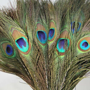 10Pcs-Natural-Peacock-Tail-Feathers-10-12inch-For-Party-Wedding-Cloth-DIY-Decor