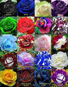 100 Seeds Rarest Rose Flower Seeds 20 Different Varieties 5 Seeds Each