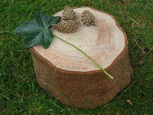 """Spruce Bark Bois Log Slice Décoratif écran Logs 6"""" Diam X 6"""" épais + 3 Cônes-afficher Le Titre D'origine"""