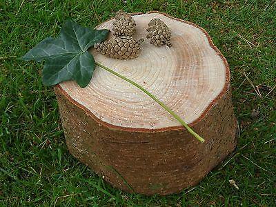 "Slim 12 Spruce Bark Wood Log Slice Decorative Display Logs 6"" Diam X 6"" Thick X 12"