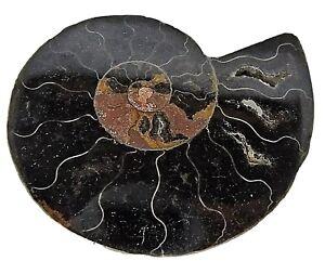 fosil-de-amonite-20-grs