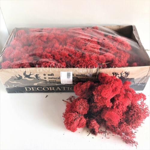 Natural Icelandic Reindeer Moss Preserved Dried Craft Flower Decoration