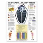 Maintaining a Healthy Weight by Anatomical Chart Co. (Fold-out book or chart, 2001)