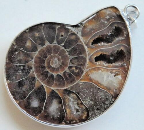 Différents Ammonite remorque percés Photo ORIGINALE