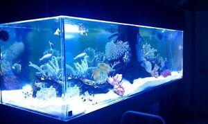 Custom-Acrylic-Aquarium-You-Can-Build-For-MUCH-LESS-than-Retail