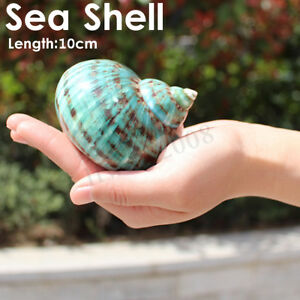 10cm-Naturel-Vert-Coquillage-Conque-Shell-Escargot-de-Mer-Decor-Aquarium-Ornemen