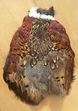 1 Partial Ring-Necked Pheasant Pelt  ~ BEAUTIFUL FEATHERS!!
