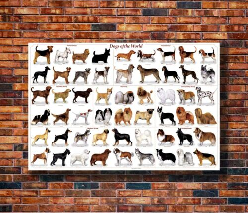 Hot Fabric Poster Cute Dog Breeds 36x24 30x20 40x27inch Z571