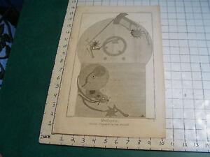 """Original engraving 1760's 10 1/2 x 16"""" PENDULE D'EQUATION DU SIEUR AMURAULD"""