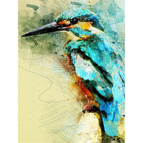 picture of kingfisher bird