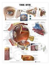 The Human Eye Anatomical Chart/Charts/Models
