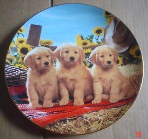 Lovely-Franklin-Mint-Collectors-Plate-GOOD-AS-GOLD-Golden-Retriever