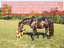 Indexbild 4 - Leinöl 15 L, Pferd, Hund, garantierte Erstpressung - immer frische Ware