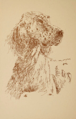 English Setter Dog Art Print #42 Stephen Kline will draw your dogs name free.