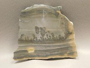Cotham-Marble-Stromatolite-Polished-Stone-Slab-3-inch-Fossil-England-5
