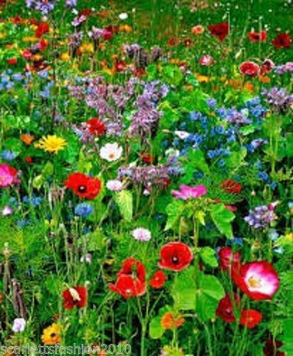 Meadow mix wild flower seeds bee butterfly annuals perennial grass 1kg  mix 13