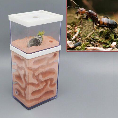 Ant Nest Formicarium Housing Ant Farm House Ant Colony Workshop US