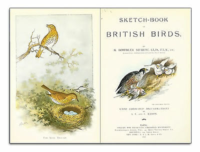 A history of British birds Ornithology and natural history in pdf ebooks on disc