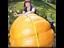 BIG PUMPKIN DILLS ATLANTIC GIANT Vegetable Seeds  15 FINEST SEEDS