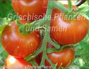 Mr-Stripey-Tomate-gelb-rot-gestreifte-Tomaten-10-frische-Samen-Balkon