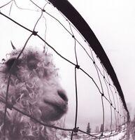 Pearl Jam - Vs [new Vinyl] 180 Gram on Sale