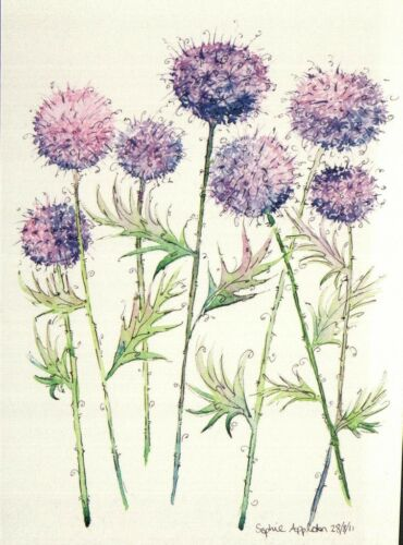 15630 Postcard Flowers Echinops Ritro un-posted