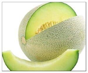 Honeydew Green Melon Seeds | NON-GMO | Heirloom | Fresh Garden Seeds