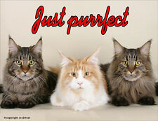 Maine Coon Cats Fridge Magnet, Just Purrfect!