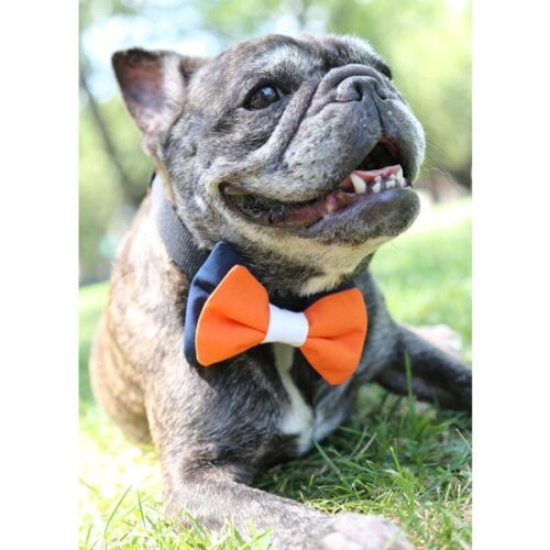 UOH Orange and White Bow Tie for Dogs - FREE SHIPPING Navy