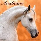Arabians 2017 Calendar Willow Creek Press (corporate Author)