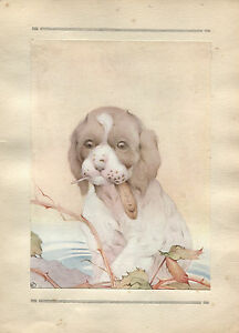 Edward Julius Detmold Vintage Print The Spaniel - The Book of Baby Dogs 1929