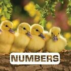 Numbers by Judith Nouvian (Hardback, 2016)