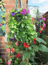 Jardín Vertical largo 30 Bolsa De Flor Colgante redondo vegetal