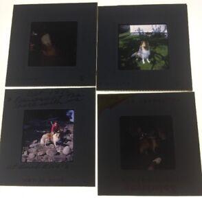 Vtg-1970-s-35mm-Slides-Collie-Dog-Lassie-Kodachrome-Lot-Of-4