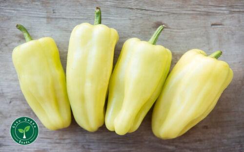 5 graines de tournesol 10 graines Blanc Gypsy Pepper-Capsicum Annuum-Cubanelle