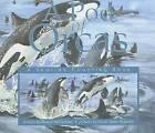 A Pod of Orcas by Sheryl McFarlane (Paperback, 2006)