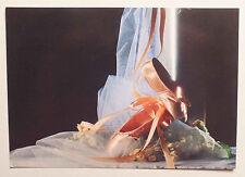 CP - PHOTO PAR PDA / EVERT VAN KUIK - VERKERKE GALLERY CARD 31886 - 1989 *