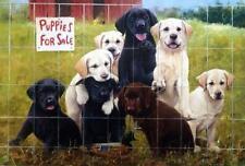James Killen Puppies for Sale Labradors Signed Print  24 x 16