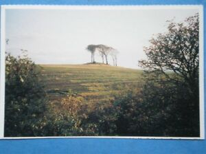 POSTCARD A FEW LONELY TREES ON A HILL - Tadley, United Kingdom - Full Refund less postage if not 100% satified Most purchases from business sellers are protected by the Consumer Contract Regulations 2013 which give you the right to cancel the purchase within 14 days after the day you receive th - Tadley, United Kingdom