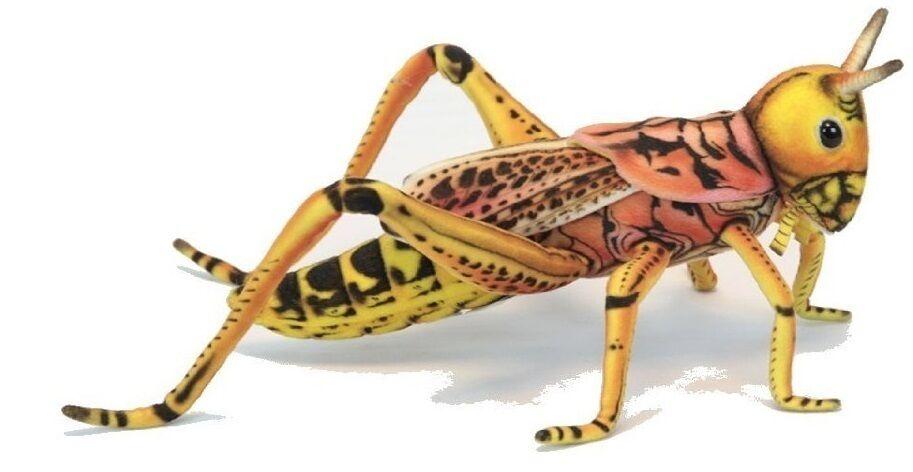 Grasshopper 27 cm Soft Toy Stuffed Animal Toy Hansa Toy 6569