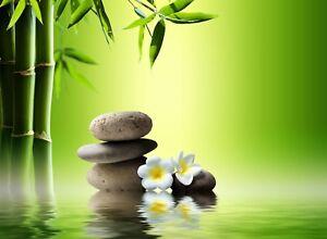 White Flower Green Bamboo Sticks Water Zen Stones Poster