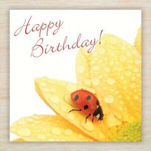 Joyeux Anniversaire Coccinelle Carte Vierge Meme Jour Envoi Gratuit 1st Classe Envoi Ebay
