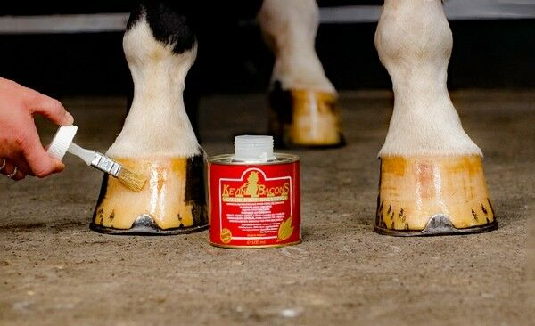 Als Set, Kevin Bacon's Hoof Solution und KEVIN BACON'S Liquid Dressing Hoof Dressing Liquid ca73df