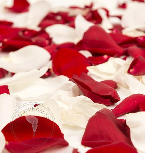 rouge & blanc Rose Petals