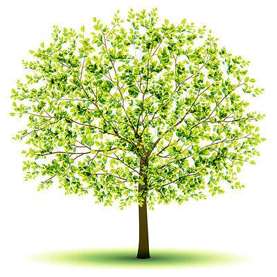 green-tree-lane