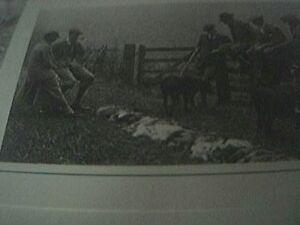 ephemera-1991-picture-reprint-pheasant-shpt-bishop-burton-1929