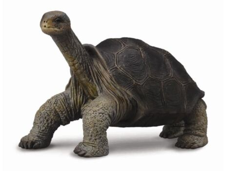 Collecta 88619 Galápagos-testuggine gigante 7 cm animali selvatici sentiero George